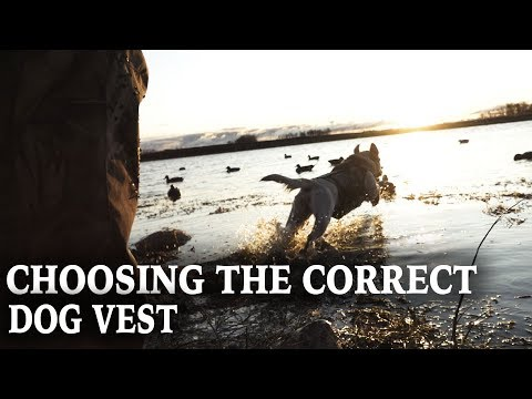 How To Pick A Dog Vest For Hunting