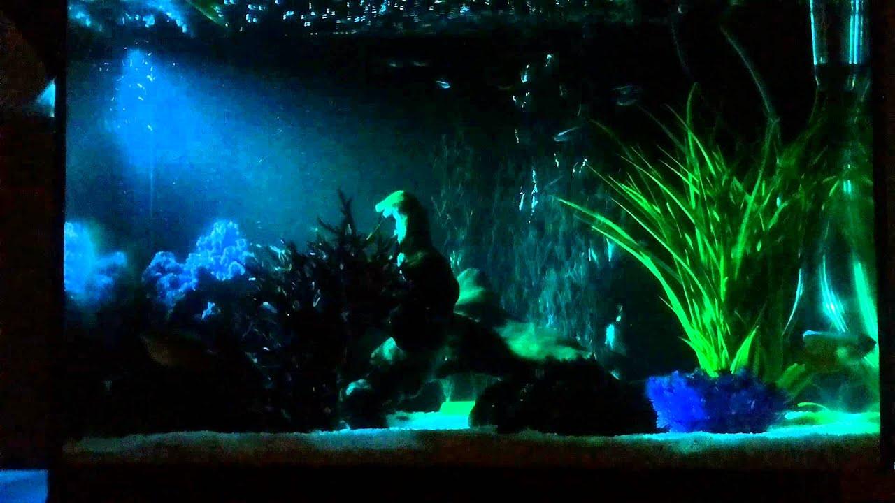 Tropisch zoetwater aquarium bij nacht   YouTube