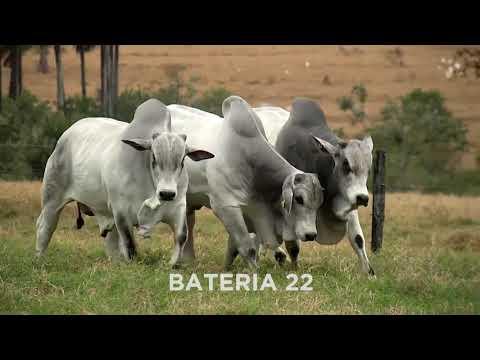 BATERIA 22