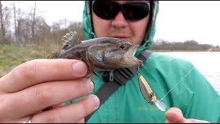 Ловля ротана весной на воблеры и резину. Подводные съемки. Рыболовный дневник