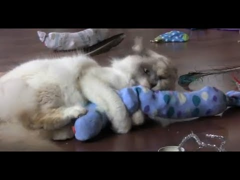 How To Make A Sock Snake Cat Toy