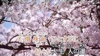 坂本冬美 桜の如く