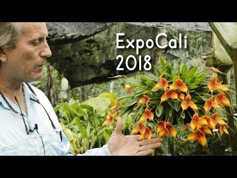 ORQUÍDEAS DE EXPOSICIÓN | Cali 2018