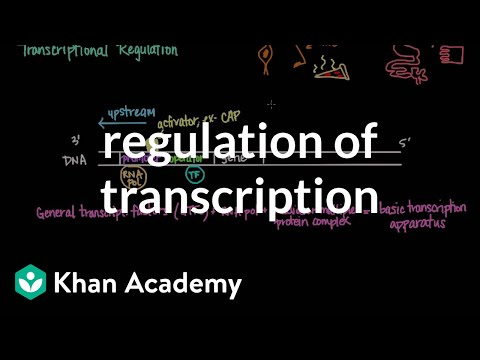 Regulation of transcription | Biomolecules | MCAT | Khan Academy