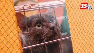 Фотовыставка бездомных животных открылась в Вологде