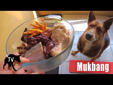 Dog Food Mukbang   Fish, Chicken, Beef, Deer