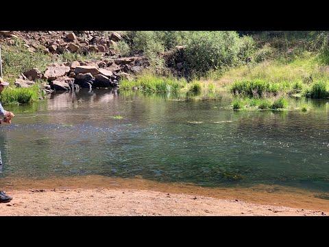 Fly Fishing Beaver Creek Below Skaguay Reservoir, Colorado Sept, 2019