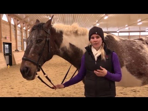 Riding with Bitless Bridles - YouTube