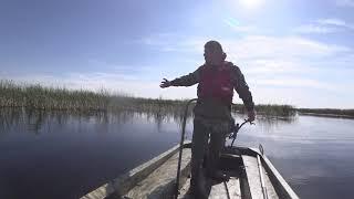 Бляха муха скоро лето ПНД Казанка на болоте
