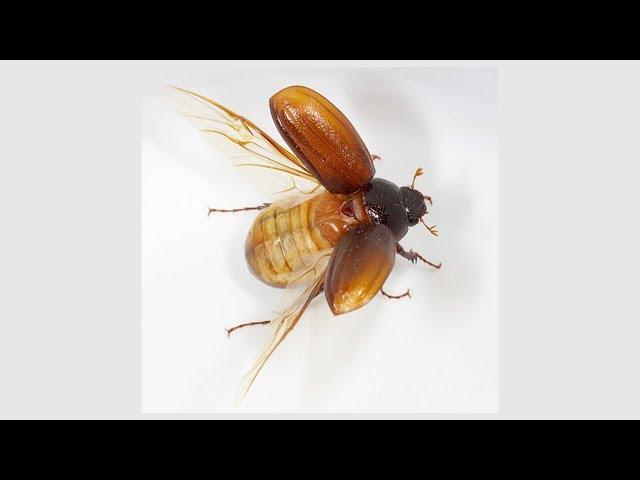 Cual es el animal mas pequeño pero mas peligroso del mundo?