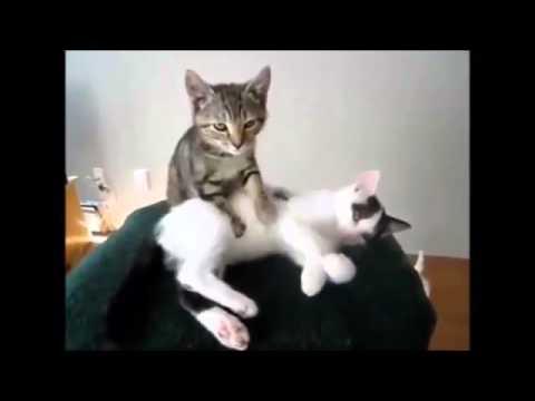 Best Funny Videos Better Than Pranks Cat Videos 0218