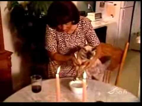 Cat Eating With Chopsticks Youtube