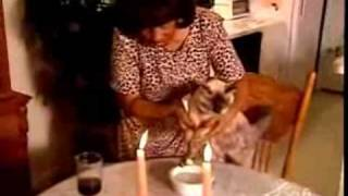 Cat eats with fork and chopsticks