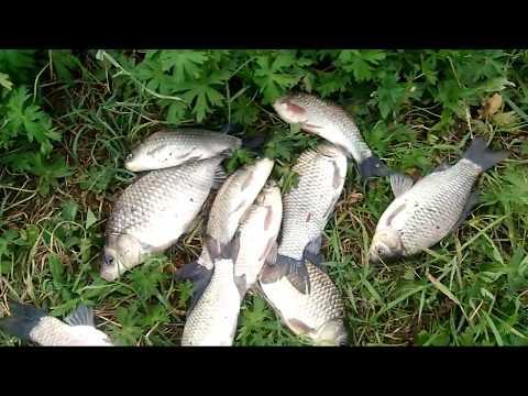 рыбалка на сазана и карпа на поплавок видео