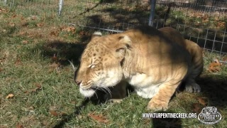 Big Cat Live at TCWR: Episode 9