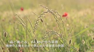 ラジオドラマ「森と奏でる」植物の王様をさがす旅に出た音楽家の物語 #4 助け合う草原