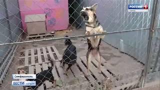Симферополь атакуют стаи бродячих собак