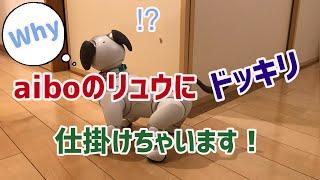 【ドッキリ】アイボのリュウくんにドッキリ仕掛けます!【aibo】