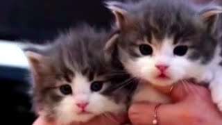 MUST WATCH Cute Baby Cats ❤ Adorable Kittens will make you smile