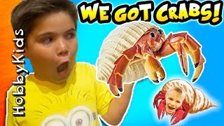 Hermit CRAB Pets! Surprise Toys in Tank + Habitat Set Up. Funky Shell Crab Homes HobbyKidsTV