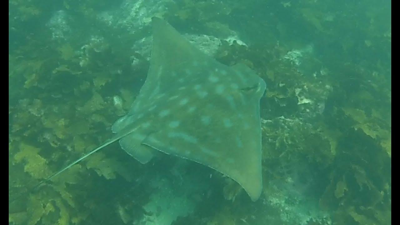 Snorkeling Trip to Bushrangers Bay - YouTube