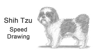 Shih Tzu Dog Time-lapse (Speed) Drawing