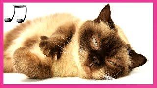 落ち着きのない猫をリラックスして眠りに設計された猫の音楽 CATS MUS C 平成29年