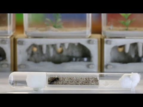 THA Genesis Test Tube Inserts | Review & Tutorial