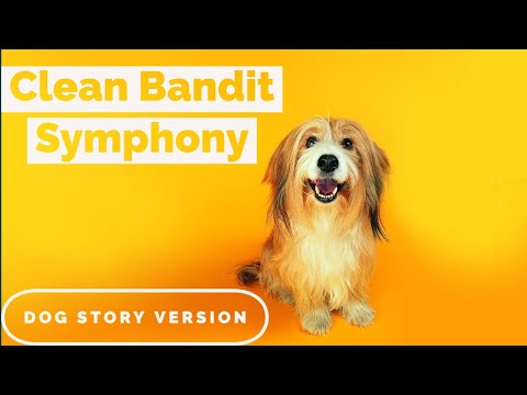Symphony Clean Bandit Cover | Symphony Dog Version | Rohith Samuel | Zara larsson #Stayhome