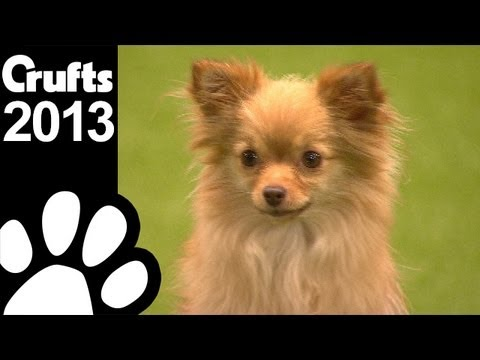 Freestyle Heelwork To Music  - Crufts 2013