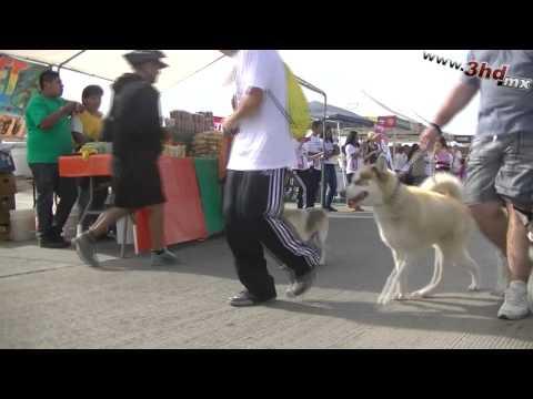 1er Carrera Canina Desom TJ
