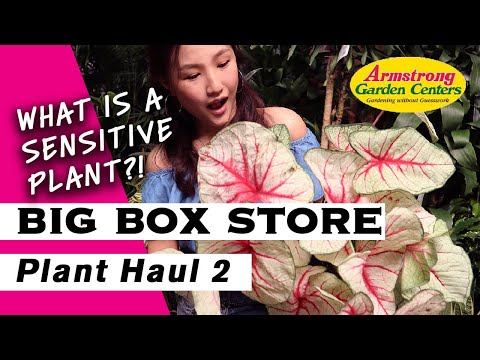 HOUSEPLANT HAUL IN BIG BOX STORE NURSERY | ARMSTRONG GARDEN CENTER Plant Tour | Los Angeles