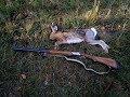 Охота на зайца, открытие 2018г. Перепел в ноябре. Момент выстрела.