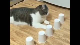kucing ini sangat pintar bisa......