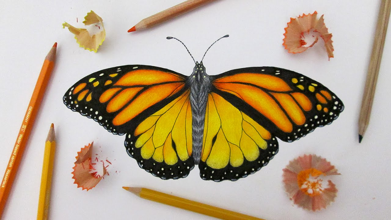 Speed Drawing A Monarch Butterfly Youtube