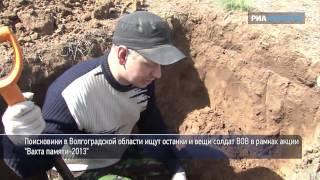Как поисковики ищут останки и вещи солдат, погибших в ВОВ