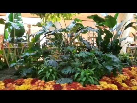 Gardens at the Wynn Casino and Hotel, Las Vegas - YouTube