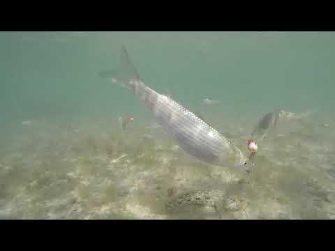 Как клюет кефаль под водой