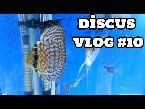 Discus Vlog #10 [09.07.2017]