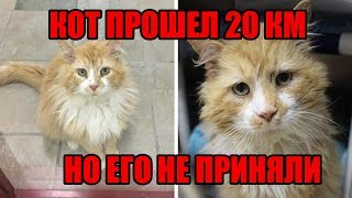 Кот прошёл 20 километров, чтобы вернуться в семью | Спасение кота Тоби| Спасение домашних животных