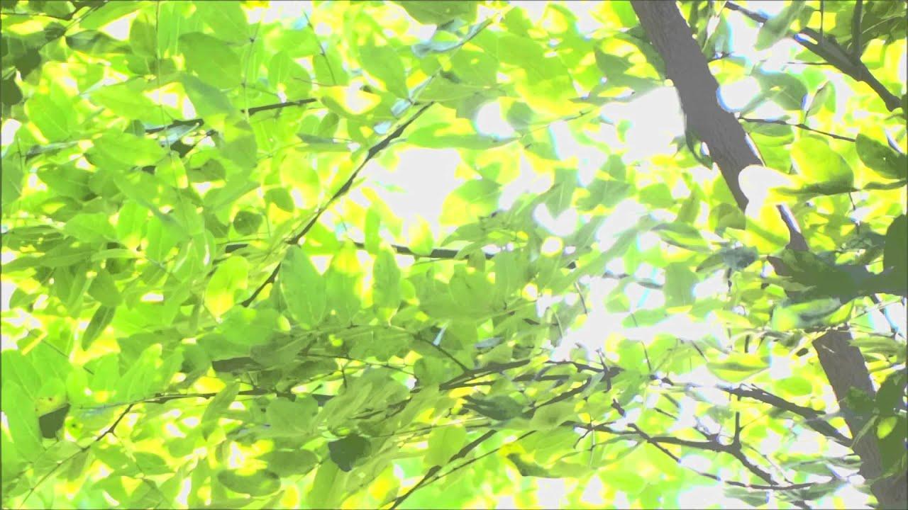 無料 動画素材 植物 木漏れ日 その4 - YouTube