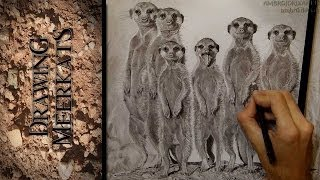 Drawing Meerkats