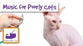 Relaxing Music for Cats in spring stress illness new pet noise animal music - pet therapy