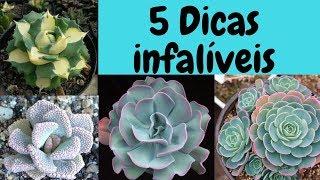 Suculentas – 5 dicas infalíveis pro sucesso no cultivo