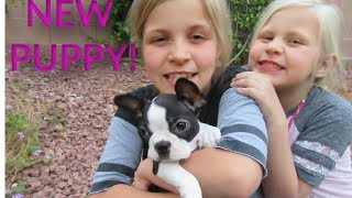 BABY ALIVE CHANNEL'S NEW Real Live Puppy Dog Pet!  Black and White Cute Puppy!