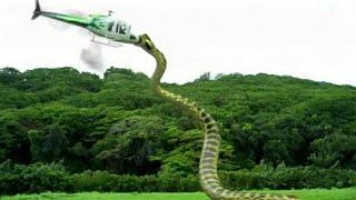 Kalian Tidak Akan Percaya Kalau Tidak Melihatnya Langsung! Inilah Makhluk Mengerikan Penghuni Amazon