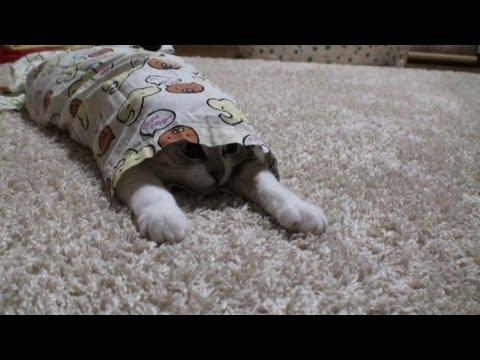 パジャマのズボンからネコを出す方法