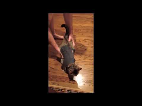 10 Funniest Cat Videos #2 | Funny Animals