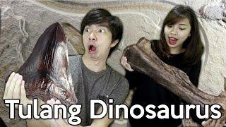 - Penemuan 3 Fosil Dinosaurus