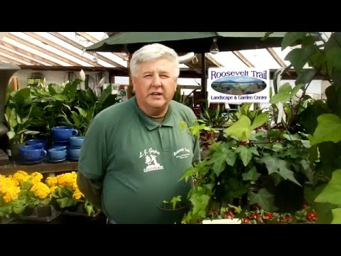 2016 Maine IGC Commercial (Roosevelt Trail Landscape and Garden Center)
